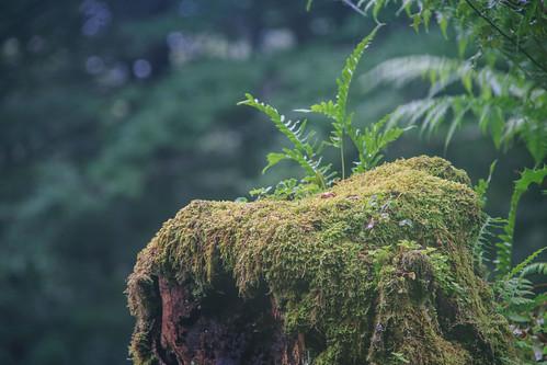 Parque Natural de #Gorbeia #DePaseoConLarri #Flickr - -883