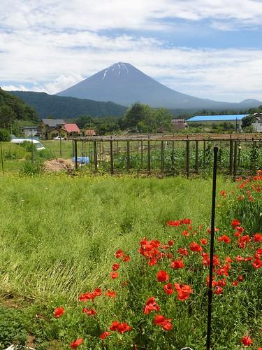 jp16-Fuji-Saiko-Village (14)