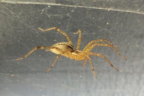 BBN Spider