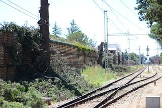 taglio alberi stazione turi