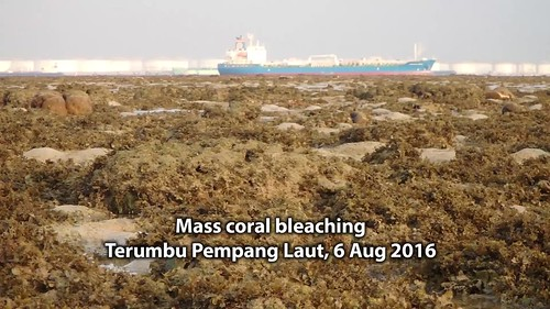Mass coral bleaching at Terumbu Pempang Laut, 6 Aug 2016