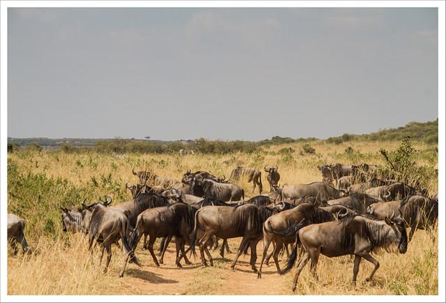 MasaiMara-172